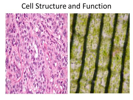 Cell Structure and Function. Cell Theory All living organisms are made of cells. Cells are small aqueous solution (cytoplasm) organelles (subcellular.