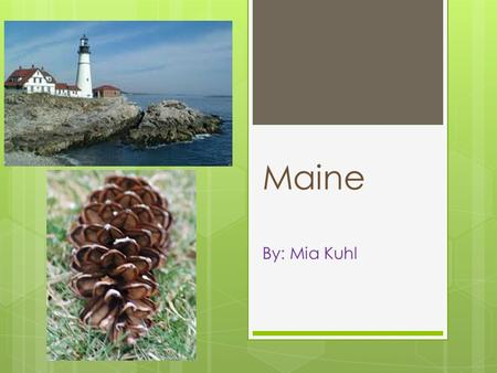 Maine By: Mia Kuhl. Maine's State Bird Black-capped Chickadee.