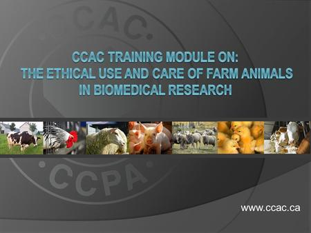 Www.ccac.ca.  This training module applies to all farm animals used in biomedical research including: dairy and beef cattle dairy and beef cattle sheep.