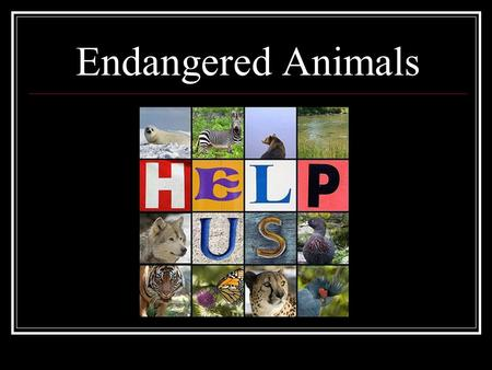 Endangered Animals. By K. Coolman Subject and Grade Level Although connections with art and literacy make this unit interdisciplinary, the focus is social.