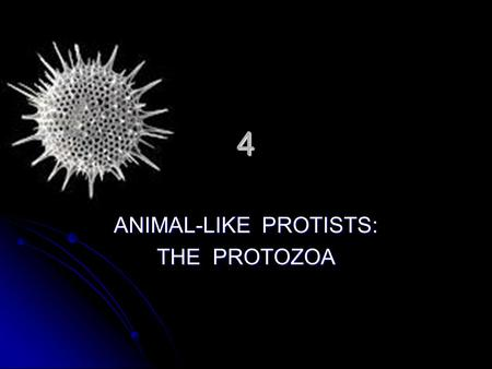 ANIMAL-LIKE PROTISTS: THE PROTOZOA