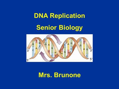 DNA Replication Senior Biology Mrs. Brunone.