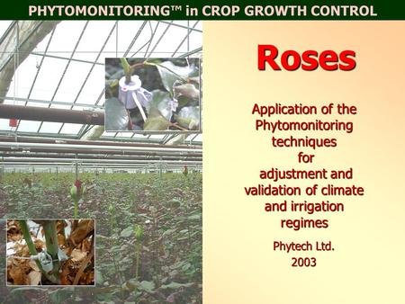 PHYTOMONITORING™ in CROP GROWTH CONTROLRoses Application of the Phytomonitoring techniques for adjustment and validation of climate and irrigation regimes.