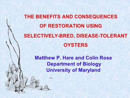 Matthew P. Hare and Colin Rose Department of Biology University of Maryland THE BENEFITS AND CONSEQUENCES OF RESTORATION USING SELECTIVELY-BRED, DISEASE-TOLERANT.