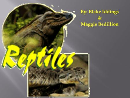By: Blake Iddings & Maggie Bedillion.  There's about 6500 known species of reptiles  Split into 3 different orders:  Turtles  Lizards and Snakes 