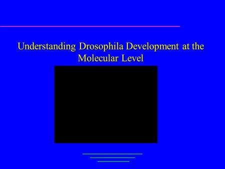 Understanding Drosophila Development at the Molecular Level Gene Myers EECS, UCal, Berkeley.