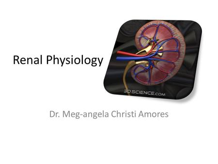 Renal Physiology Dr. Meg-angela Christi Amores. The Kidney Functional Anatomy – two kidneys lie on the posterior wall of the abdomen – Outside the peritoneal.