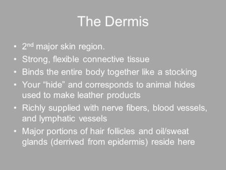 The Dermis 2nd major skin region. Strong, flexible connective tissue