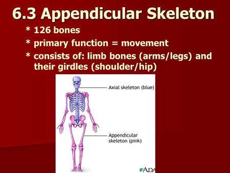 6.3 Appendicular Skeleton