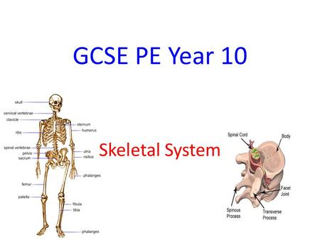 GCSE PE Year 10 Skeletal System. The Skeletal System Learning Objectives Be able to explain the function of the skeleton Be able to name all the bones.