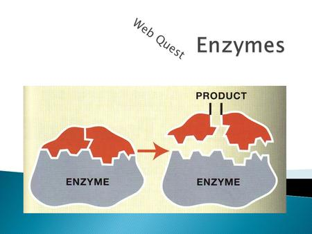 Web Quest.  Enzymes are proteins that speed up chemical reactions in the body.