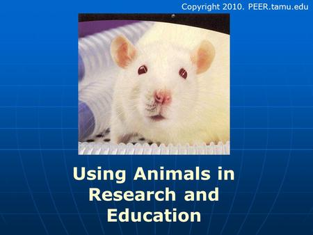 use of animals in research Human subjects and alternatives to live subjects have been proposed various alternatives to research with animals have been proposed, including the use of plants.