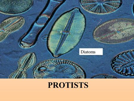 PROTISTS Diatoms. Commonalities / Differences in the Protist Kingdom All are eukaryotes (cells with nuclei). Live in moist surroundings. Unicellular or.
