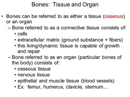 Bones: Tissue and Organ Bones can be referred to as either a tissue (osseous) or an organ –Bone referred to as a connective tissue consists of: cells extracellular.