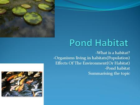Pond Habitat -What is a habitat?