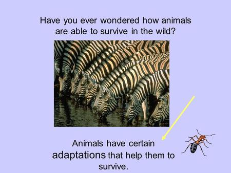Have you ever wondered how animals are able to survive in the wild? Animals have certain adaptations that help them to survive.