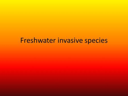Freshwater invasive species. Stuff that can be invasive is birds and mammals. When Invasive species enter a new place it seems to tack over. Invasive.