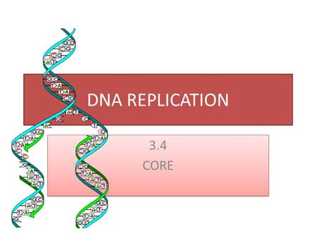 DNA REPLICATION 3.4 CORE 3.4 CORE. 3.4.1 Explain DNA replication in terms of unwinding the double helix an separation of the strands by helicase, followed.