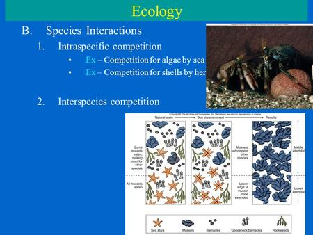Ecology B.Species Interactions 1.Intraspecific competition Ex – Competition for algae by sea urchins Ex – Competition for shells by hermit crabs 2.Interspecies.