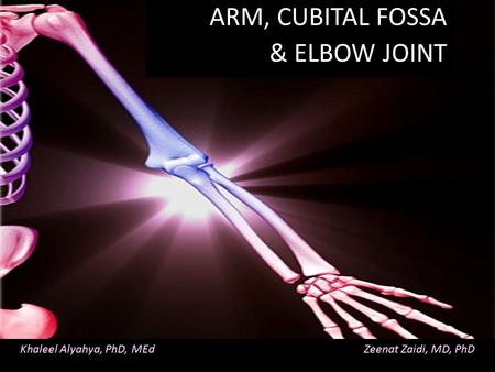 Khaleel Alyahya, PhD, MEd Zeenat Zaidi, MD, PhD ARM, CUBITAL FOSSA & ELBOW JOINT ARM, CUBITAL FOSSA & ELBOW JOINT.