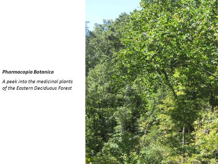 Pharmacopia Botanica A peek into the medicinal plants of the Eastern Deciduous Forest.