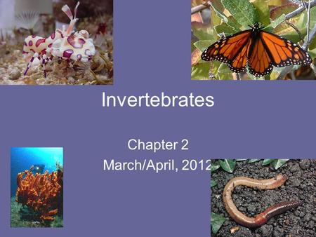 Invertebrates Chapter 2 March/April, 2012.