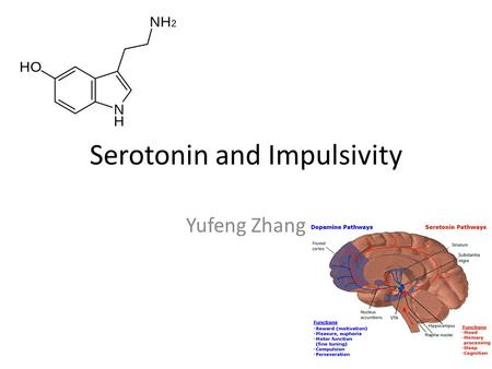 Serotonin and Impulsivity Yufeng Zhang. Serotonin Originate from the median and dorsal raphe nuclei. Serotonin has been implicated in a variety of motor,
