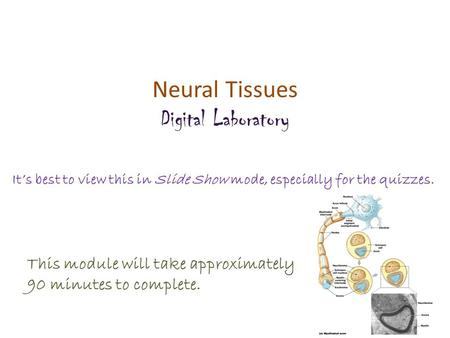 Neural Tissues Digital Laboratory It's best to view this in Slide Show mode, especially for the quizzes. This module will take approximately 90 minutes.