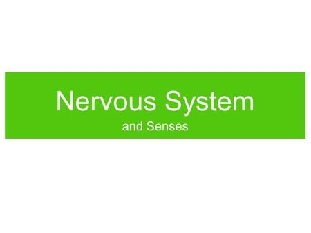 "Nervous System and Senses. Neural Activity The Neuron Which direction does a signal travel down a neuron? What do you think a ""signal"" is? How do you."