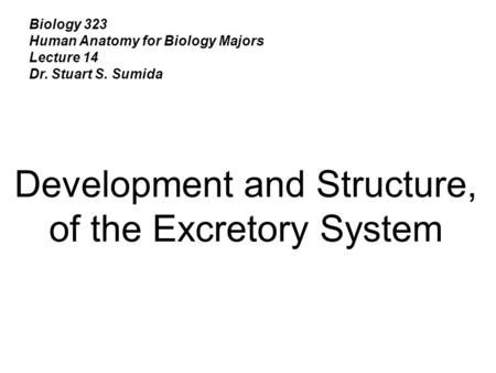 Biology 323 Human Anatomy for Biology Majors Lecture 14 Dr. Stuart S. Sumida Development and Structure, of the Excretory System.