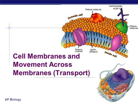 AP Biology 2005-2006 Cell Membranes and Movement Across Membranes (Transport)