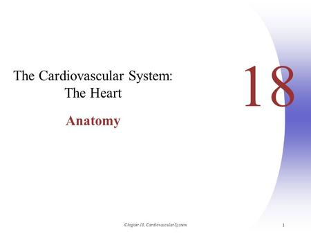 The Cardiovascular System: The Heart Anatomy
