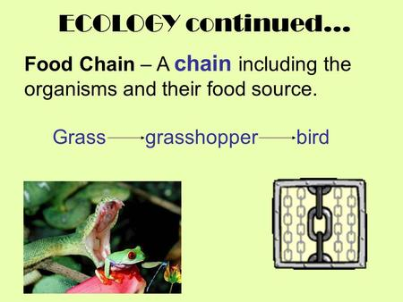 ECOLOGY continued… Food Chain – A chain including the organisms and their food source. Grass grasshopper bird.