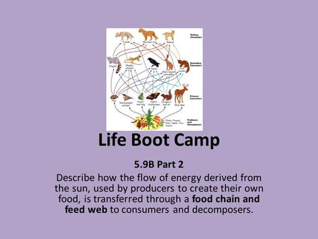 Life Boot Camp 5.9B Part 2 Describe how the flow of energy derived from the sun, used by producers to create their own food, is transferred through a food.