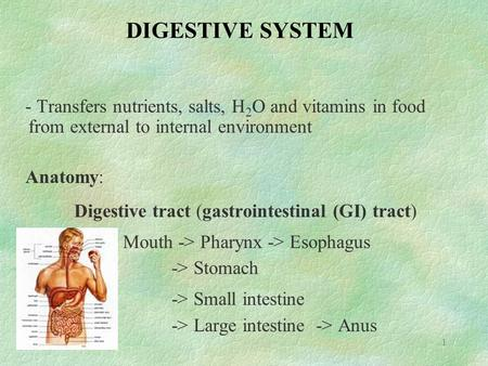 1 DIGESTIVE SYSTEM - Transfers nutrients, salts, H 2 O and vitamins in food from external to internal environment Anatomy: Digestive tract (gastrointestinal.