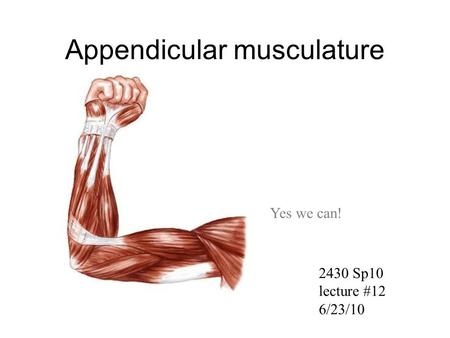 Appendicular musculature Yes we can! 2430 Sp10 lecture #12 6/23/10.