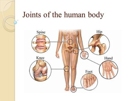 Joints of the human body. Joints are the point of contact (articulations) between two connecting bones. The stability and the integrity of joints are.
