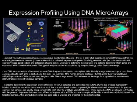 Expression Profiling Using DNA MicroArrays - Each cell type within an organism expresses a unique combination of genes – this is, in part, what makes cells.