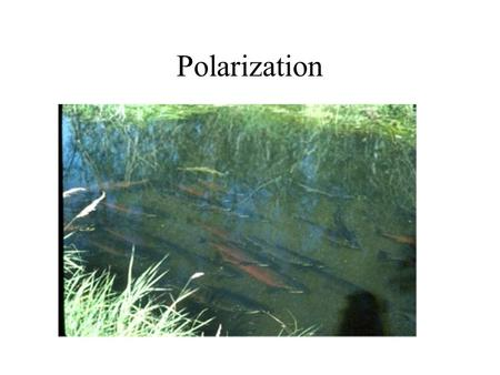 Polarization. Describe what is meant by polarized light. Describe polarization by reflection. State and apply Brewster ' s law. Explain the terms polarizer.