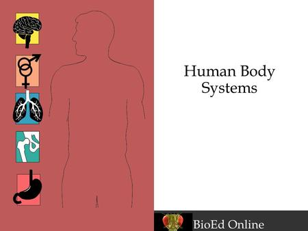 BioEd Online Human Body Systems. www.BioEdOnline.org BioEd Online Levels of Organization in the Body Cells Tissues Epithelial, connective, muscular, nervous.