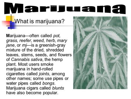 What is marijuana? Marijuana—often called pot, grass, reefer, weed, herb, mary jane, or mj—is a greenish-gray mixture of the dried, shredded leaves, stems,