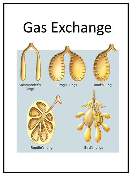 Gas Exchange.