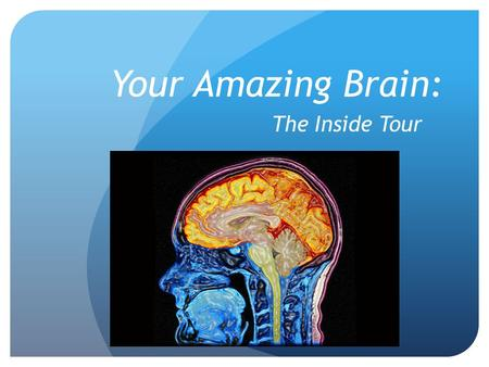 Your Amazing Brain: The Inside Tour. Did You Know…? Your brain contains 100 billion neurons and 60 trillion synapses (cortex)