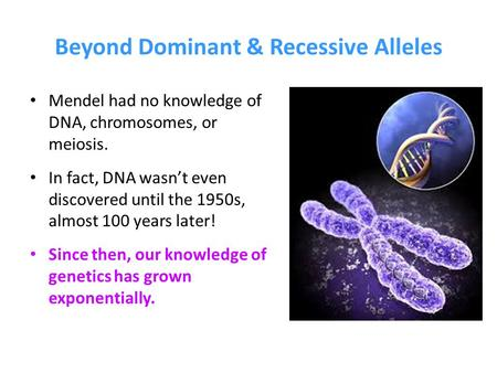 Beyond Dominant & Recessive Alleles Mendel had no knowledge of DNA, chromosomes, or meiosis. In fact, DNA wasn't even discovered until the 1950s, almost.