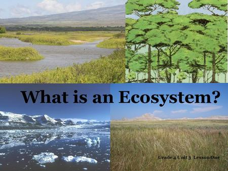 What is an Ecosystem? Grade 4 Unit 3 Lesson One