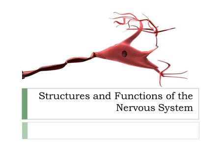 Structures and Functions of the Nervous System.  The nervous system controls body activities and perceives and reacts to internal and external stimuli.