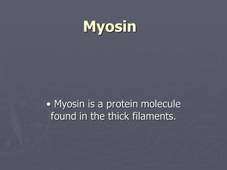 Myosin Myosin is a protein molecule found in the thick filaments. Myosin is a protein molecule found in the thick filaments.