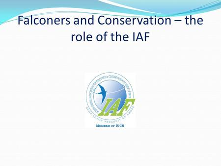 Falconers and Conservation – the role of the IAF.