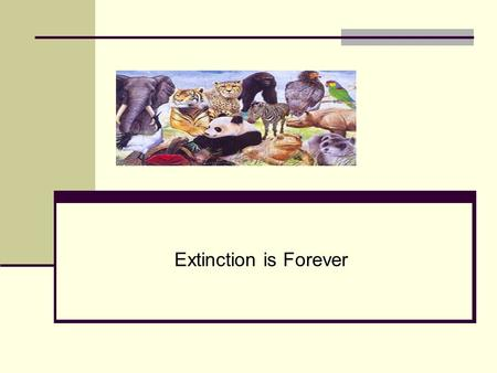 Extinction is Forever. What is Extinction? Extinction is the end of a species. Extinction begins the moment the last member of a species dies. Extinction.