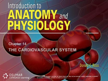 THE CARDIOVASCULAR SYSTEM Chapter 14. Introduction Cardiovascular system: heart, blood and blood vessels Cardiac muscle –Makes up bulk of heart –Provides.